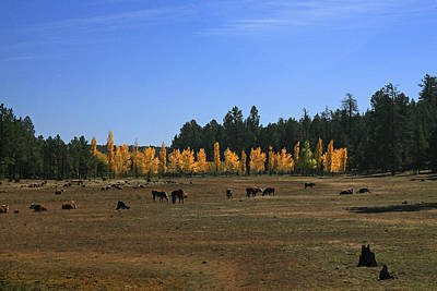 Photograph - Fall In Line by Randy Oberg