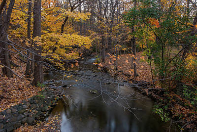 Photograph - Fall In Michigan 3  by Pravin Sitaraman