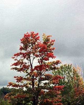 Photograph - Fall In Michigan Tree by Ellen Barron O'Reilly