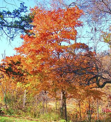 Photograph - Fall In Osage County by Janette Boyd