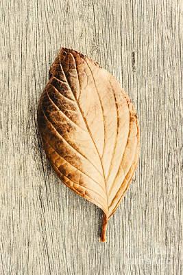 Fall In Perfect Detail Art Print