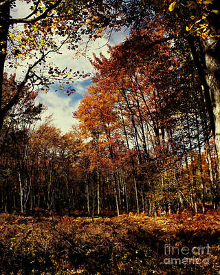 Outdoor Photograph - Fall In Rural Pennsylvania by Tom Gari Gallery-Three-Photography