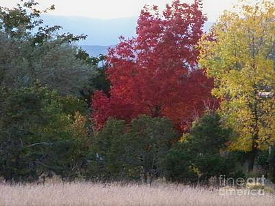 Fall In Santa Fe Art Print by Brian  Commerford