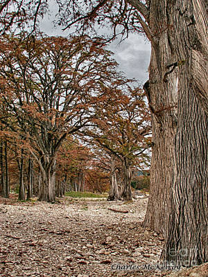 Photograph - Fall In Texas  by Charles McKelroy