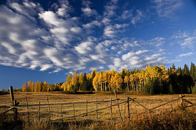Colour Photograph - Fall In The Cariboo by Detlef Klahm