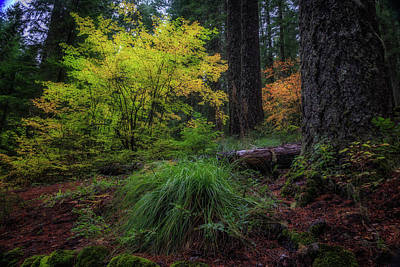 Photograph - Fall In The Forest by Cat Connor