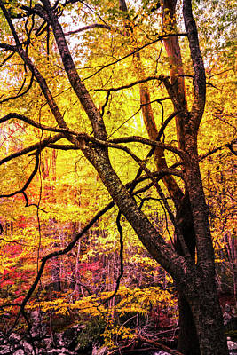 Photograph - Fall In The Forest by Debra and Dave Vanderlaan