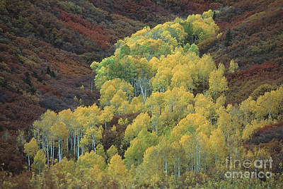 Photograph - Fall In The La Sal Mountains by Stan and Anne Foster
