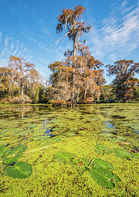 Photograph - Fall In The Louisiana Swamp by Andy Crawford