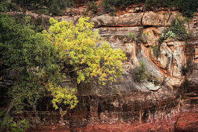 Photograph - Fall In The Red Rocks  by Saija Lehtonen