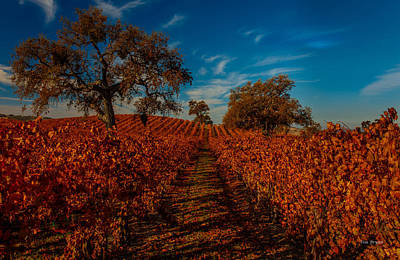 Photograph - Fall In The Vineyards by Tim Bryan