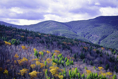 Photograph - Fall In The White Mountains by Gary Shepard