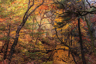 Photograph - Fall In The Woods by Joni Eskridge