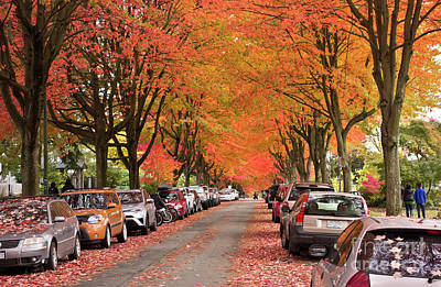Photograph - Fall In Vancouver 2017 1 by Maria Janicki