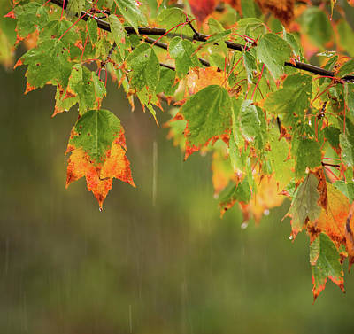 Photograph - Fall-ing Rain Square by Terry DeLuco