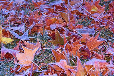 Photograph - Fall Into Winter by Patrick Witz