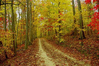 Photograph - Fall Salem Lake Trail by James C Thomas