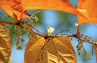 Photograph - Fall Jewels by Becca Brann