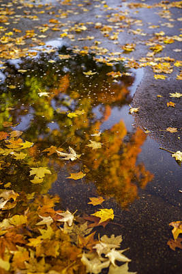 Photograph - Fall Kind Of Feeling 2 by Michael Donahue