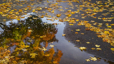 Photograph - Fall Kind Of Feeling by Michael Donahue