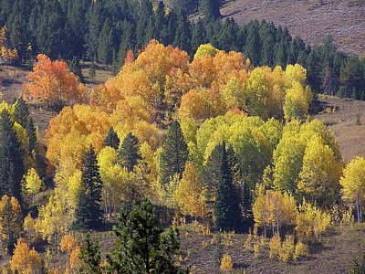 Photograph - Fall Lands In Western Wyoming by DeeLon Merritt