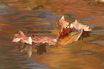 Photograph - Fall Leaf 1230 by Captain Debbie Ritter