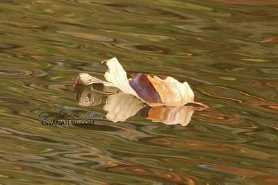 Photograph - Fall Leaf 1237 by Captain Debbie Ritter
