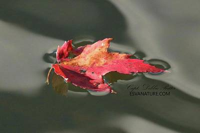 Photograph - Fall Leaf 1244 by Captain Debbie Ritter
