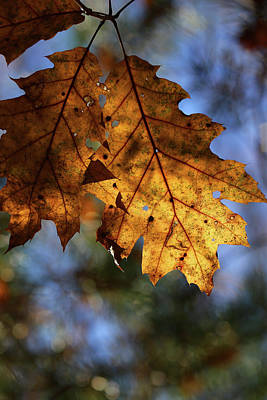 Photograph - Fall Leaf 2016 by Mary Bedy