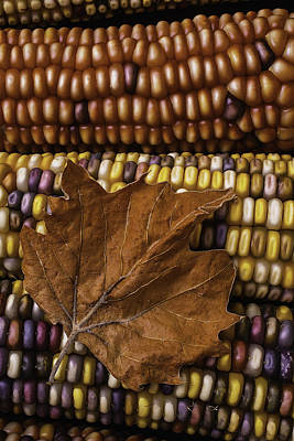Brown Leaves Photograph - Fall Leaf And Indian Corn by Garry Gay