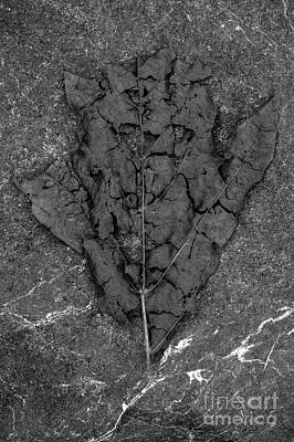 Photograph - Fall Leaf Decaying by Jim Corwin