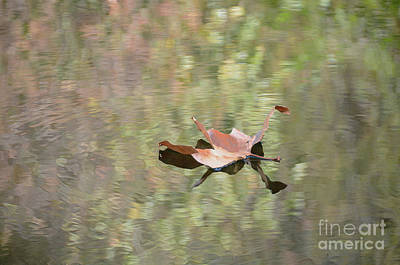 Photograph - Fall Leaf In Fall Colors by Debby Pueschel
