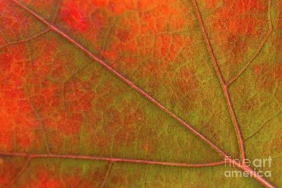 Photograph - Fall Leaf Jewel by Ana V Ramirez