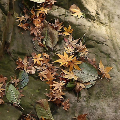 Photograph - Fall Leaf Litter by Art Block Collections