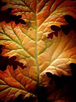 Wall Art - Photograph - Fall Leaf by Mary McGrath