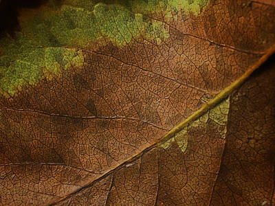 Photograph - Fall Leaf by Nathan Little