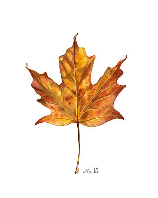 Old World Still Life Painting - Fall Leaf No. 10 by Kelsey Wilson