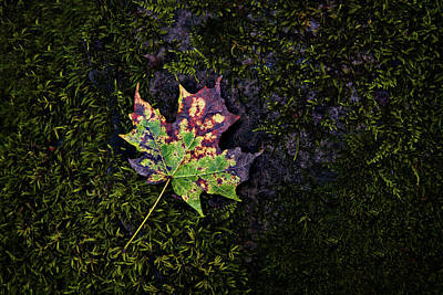 Photograph - Fall Leaf On A Rock #1 by Mark Robert Rogers