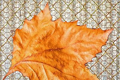 Photograph - Fall Leaf On Chicken Wire by Alice Gipson