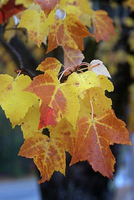 Digital Art - Fall Leaf by Patrick Groleau