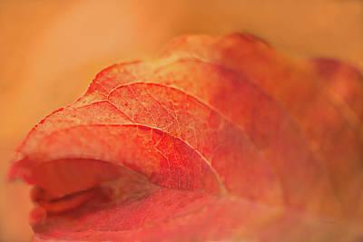 Digital Art - Fall Leaf by Ramona Murdock