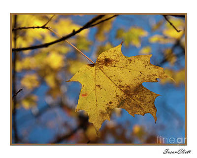 Photograph - Fall Leaf by Susan Cliett