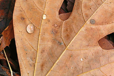 Photograph - Fall Leaf With Dew 110417 by Mary Bedy