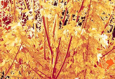 Fall Leaves #1 Art Print