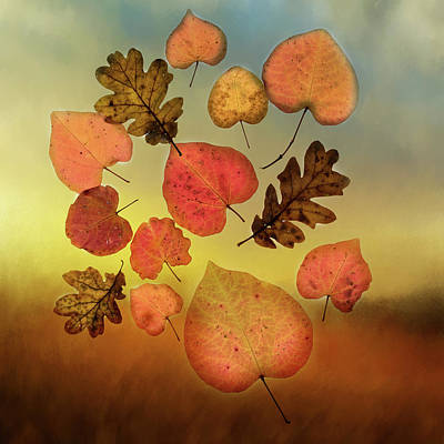 Photograph - Fall Leaves #1 by Rebecca Cozart
