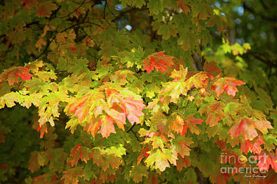 Photograph - Fall Leaves 11 Autumn Leaf Colors Art by Reid Callaway