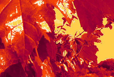 Photograph - Fall Leaves #13 by Anne Westlund