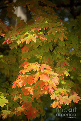 Photograph - Fall Leaves 13 Autumn Leaf Colors Art by Reid Callaway