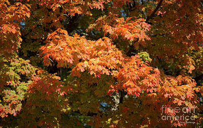 Photograph - Fall Leaves 3 Autumn Leaf Colors Art by Reid Callaway