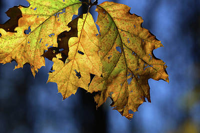 Photograph - Fall Leaves 2016 2 by Mary Bedy
